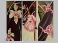Orchideas Cubanas
