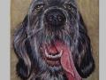 Pes polyglot / Polyglot dog
